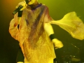 garbage-koeln-e-werk-live-26112012_26